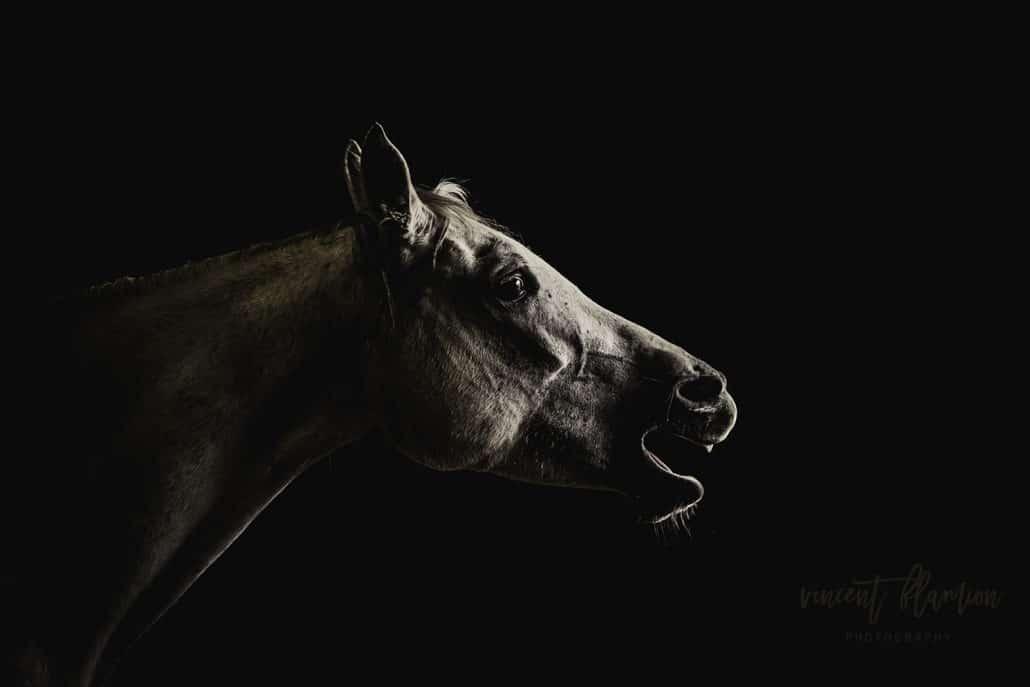 photographe chevaux luxembourg
