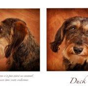 portrait de chien à luxembourg